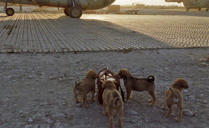 Общество: Британия отправит спецрейс в Афганистан за собаками и кошками