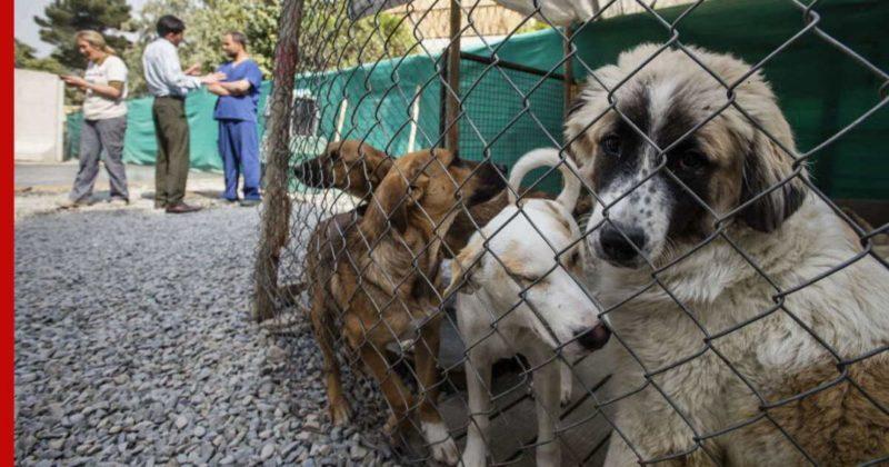 Общество: Власти Великобритании разрешили эвакуацию собак и кошек из приюта в Кабуле