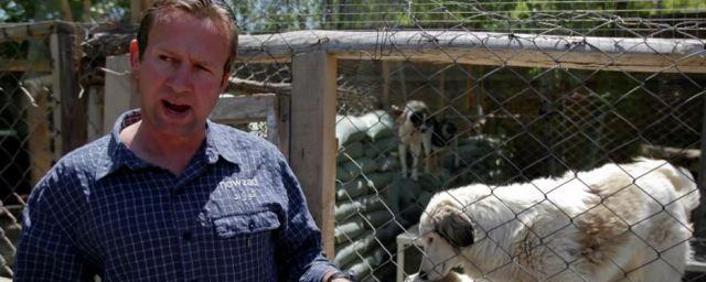 Общество: Власти Великобритании разрешили отправить чартер для эвакуации 200 собак и кошек из Кабула