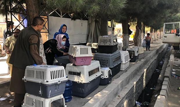 Общество: Власти Великобритании эвакуируют из Кабула 140 собак и 60 кошек