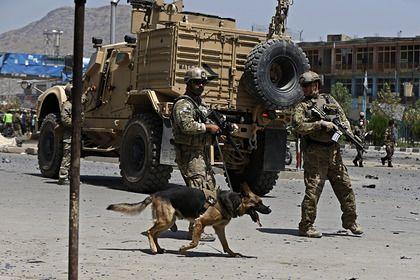 Общество: Британец раскрыл подробности эвакуации животных из Афганистана