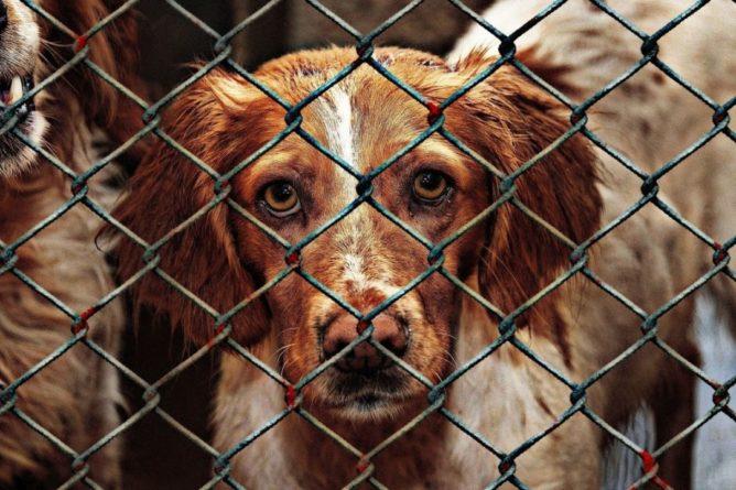 Общество: Британец смог эвакуировать 180 животных из приюта в Кабуле