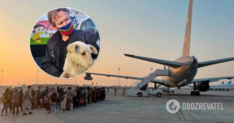 Общество: Афганистан - Британия эвакуировала из Кабула 200 кошек и собак