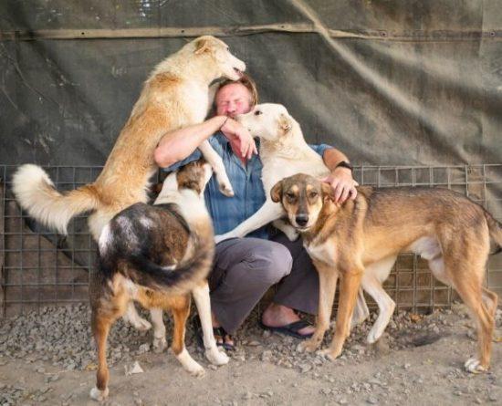 Общество: Англичане вместо беженцев эвакуировали из Афганистана кошек и собак