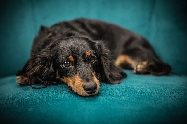Общество: Ученые из Великобритании рассказали о способах продлить жизнь своей собаки и мира