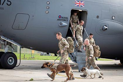 Общество: Британия вывезла служебных собак из Афганистана