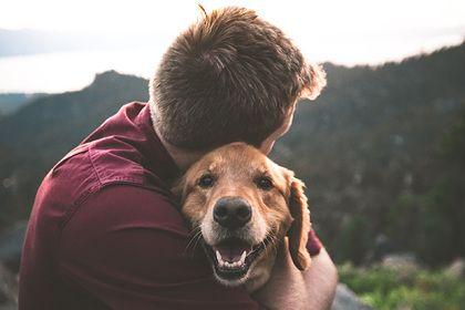 Общество: В Британии кражу домашних животных захотели приравнять к уголовному преступлению