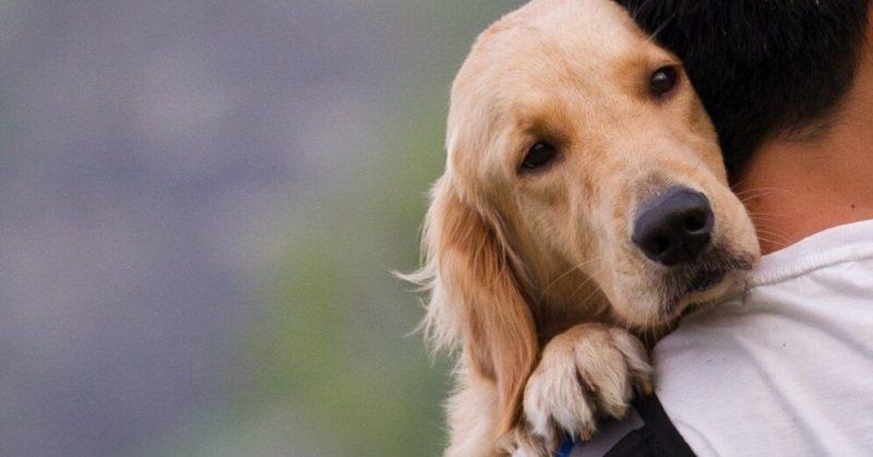 Общество: Похищение домашних животных станет в Англии уголовно наказуемым