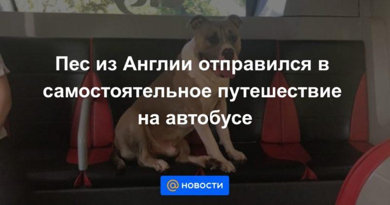 Общество: Пес из Англии отправился в самостоятельное путешествие на автобусе