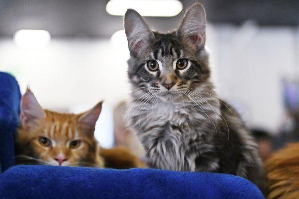Общество: В Великобритании против владельца 70 кошек завели уголовное дело