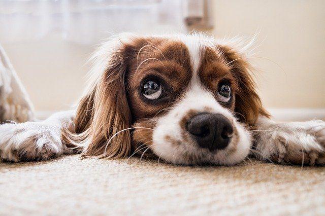 Общество: В Великобритании собака едва не сорвала матч по крикету и мира