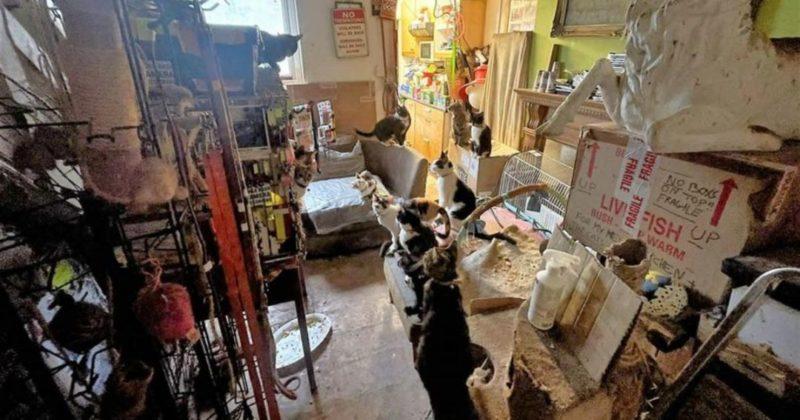 Общество: В Британии против владельца семидесяти кошек завели уголовное дело