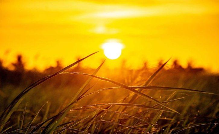 Общество: Радиоастрономы из Великобритании раскрыли настоящий цвет Солнца