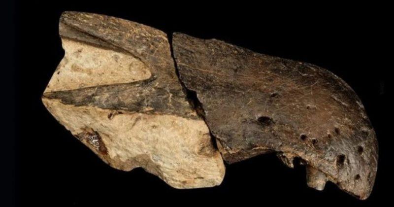 Общество: В Великобритании ученые обнаружили два новых вида крупных хищных динозавров