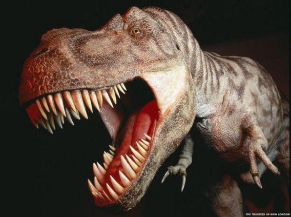 Общество: У берегов Англии ученые обнаружили останки неизвестных динозавров с «крокодильими мордами» (ФОТО)