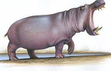 Общество: Ученые: Миллион лет назад в Англии жили огромные бегемоты