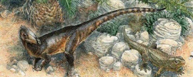 Общество: Новый вид хищного динозавра величиной с курицу обнаружен в Великобритании