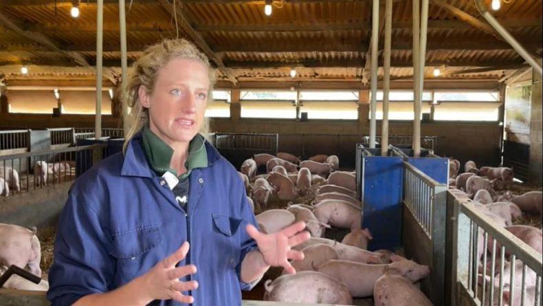Общество: Великобритания: сектор свиноводства в кризисе